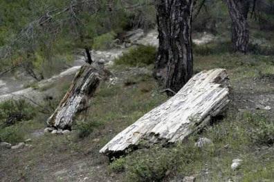 Απολιθωμένο Δάσος Λευκίμης - Φυλακτού